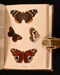 1854-71 Nests and Eggs of Familiar British Birds bound with Beautiful Butterflies