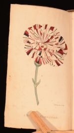1820 A Concise And Practical TREATISE Growth Culture CARNATION Hogg