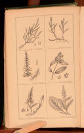 1857 4vol Deakin Florigraphia Britannica Engravings Descriptions Ferns Britain