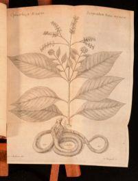 1749 Materia Medica Liber I De Plantis Caroli Linnaei Carl Linnaeus