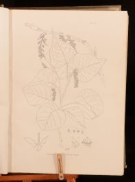 1914-1920 4vols The Cambridge British Flora Volumes II and III Text and Plate