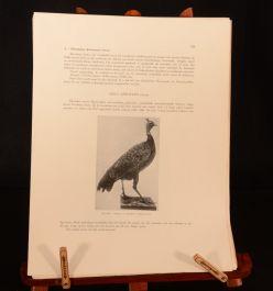1948-9 2vol De Vogels Van Belgisch Congo En Van Ruandi-Urundi H Schouteden Birds