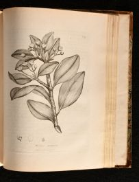1794 A Supplement to Medical Botany