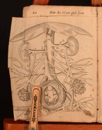Speculum Matrics; or, the Expert Midwives Handmaid