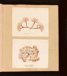 1853 Treasures of the Deep or Specimens of Scottish Sea-Weeds