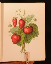 1890 6vol The Fruit Grower's Guide John Wright May Rivers Illustrated Divisions
