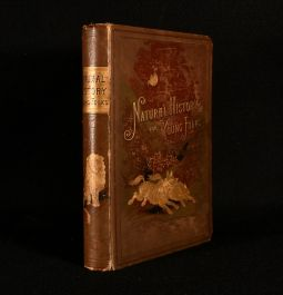 1884 Natural History For Young Folks