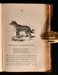 1858 Anecdotes of Dogs