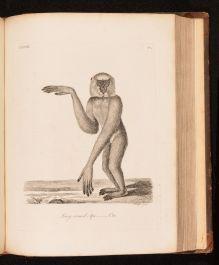 1793 History of Quadrupeds
