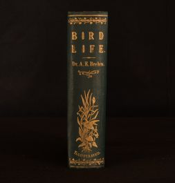 1874 Bird-Life Being a History of the Bird Its Structure and Habits