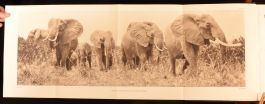 1925 Stalking Big Game With A Camera In Equatorial Africa Marius Maxwell Illustrated Plates