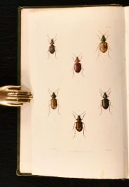 1829 Illustrations of British Entomology