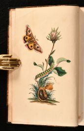 1792-1823 The Natural History of British Insects