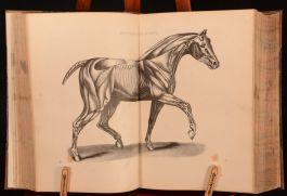 c1880 Skeavington's Modern Farriery John Sherer Illustrated Very Scarce