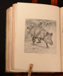 1901 Sport in Europe Aflalo Thorburn Caldwell Bennett First Edition Scarce Illustrated