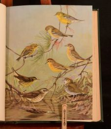 1925 3vols Birds of Massachusetts and Other New England States Colour Plate Howe