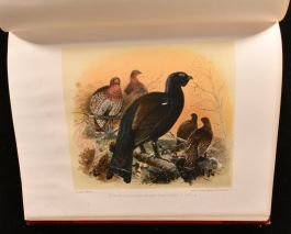 1892 Game Birds and Shooting-Sketches