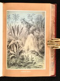 1873 The Tropical World