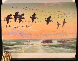 1936 2vol Oceanic Birds of South America